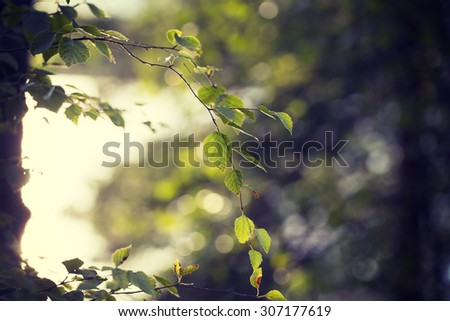Can you feel the summer. Image taken through birch leaves against the sun. Image has a strong vintage effect to create artistic flavor. - stock photo