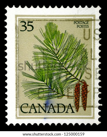 "CANADA - CIRCA 1977: A stamp printed in Canada shows pine-tree, without the inscriptions, from the series ""Trees"", circa 1977."