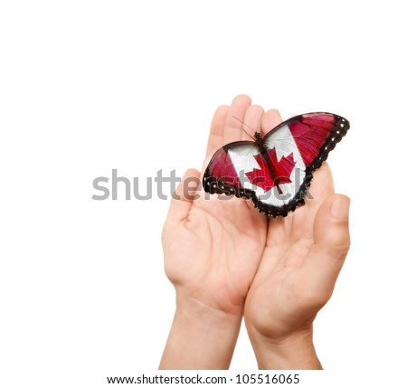 Canada  flag butterfly on a man's hands. - stock photo