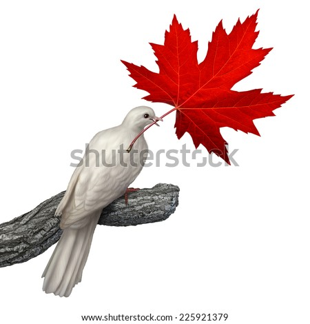 Canada peace concept as a white dove holding a red maple leaf on a white background as a symbol for canadian nonviolence and conflict resolution or issues of justice and human rights. - stock photo