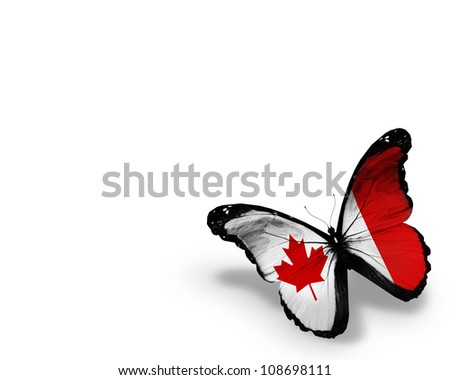 Canadian flag butterfly, isolated on white background - stock photo