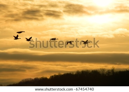 Canadian Geese fly into Sunrise - stock photo