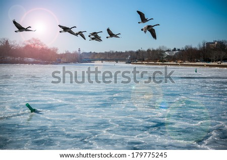 Canadian Geese Over Frozen River. Canadian Geese flying over a frozen river with lens flare, in Port Credit, Mississauga, Ontario, Canada. - stock photo