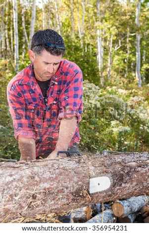 Canadian lumberjack in forest chops a tree into logs using his chainsaw
