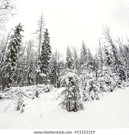 Canadian snow covered forest landscape on an overcast day