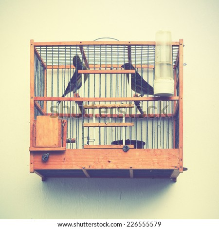Canaries in the cage on the house wall. Instagram style filtred image - stock photo