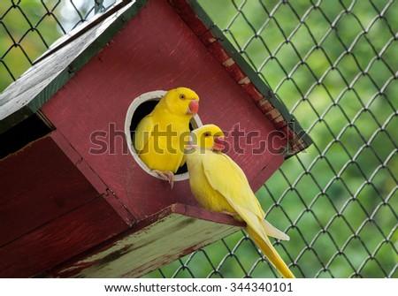 canary bird .. - stock photo