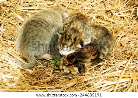 Candid image of adorable newborn kittens - stock photo