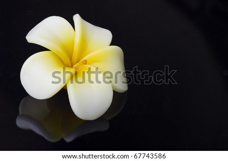 candle flower on black - stock photo