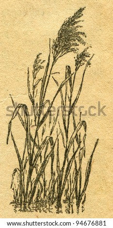 """cane - an illustration from the book """"In the wake of Robinson Crusoe"""", Moscow, USSR, 1946. Artist Petr Pastukhov - stock photo"""