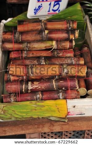 Cane in Thailand