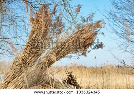 Szymon Mucha S Portfolio On Shutterstock