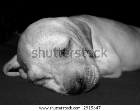 Canine Series - various canine related imagery depicting dogs of various breeds and sizes