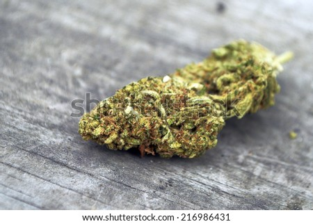 Cannabis  - stock photo