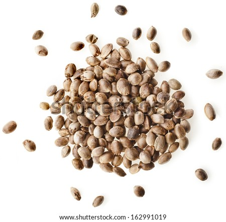 Cannabis Hemp seeds close up macro shot isolated on white background - stock photo