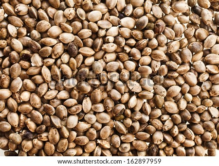 Cannabis Hemp seeds close up surface top view background - stock photo