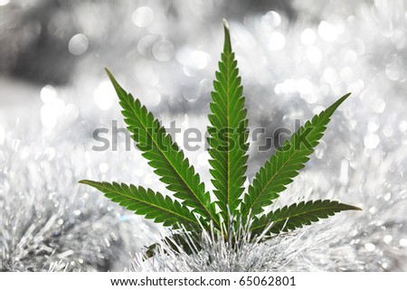 cannabis holiday - stock photo