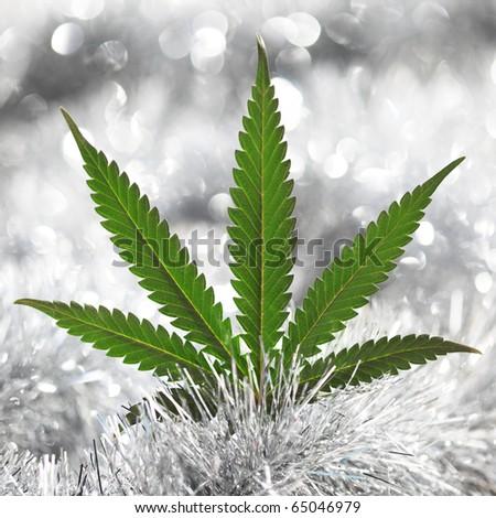 cannabis holiday background - stock photo