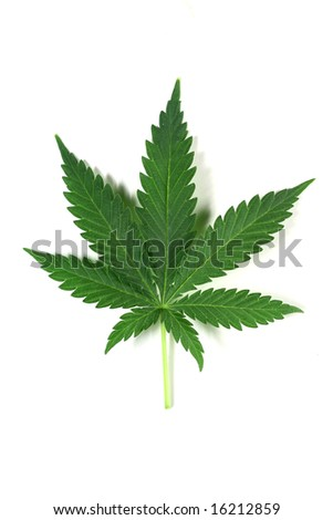 cannabis isolated - stock photo