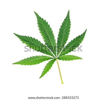 Cannabis leaf, marijuana isolated over white background - stock photo