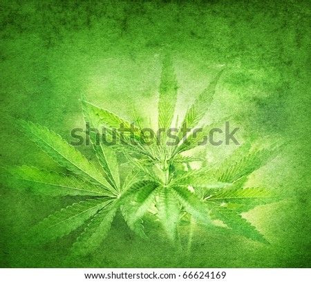 Cannabis on grunge background - stock photo