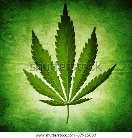 Cannabis on grunge background - stock photo