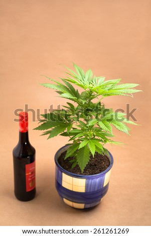 Cannabis plant in flowerpot and bottle of alcohol. - stock photo