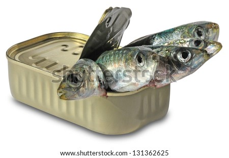 Canned sardines isolated on white background - stock photo