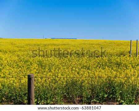Canola crop bright yellow flowers field stock photo edit now canola crop bright yellow flowers in field south africa mightylinksfo