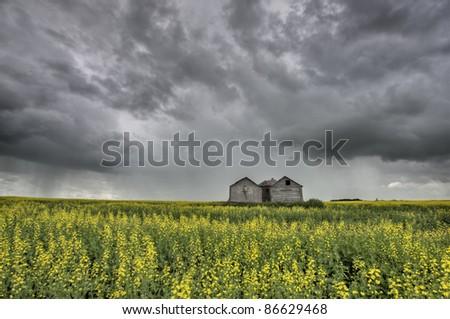 Canola Crop Canada and granary Saskatchewan Field - stock photo