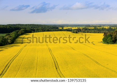 canola field (aerial view from a hot air balloon) - stock photo