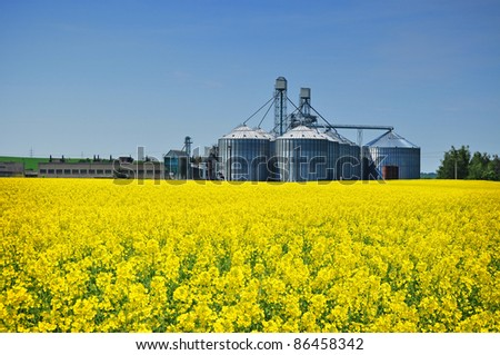 Canola field and farm silo, agriculture production - stock photo