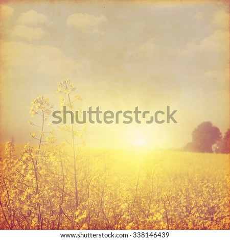 Canola field at sunset in grunge and retro style. - stock photo