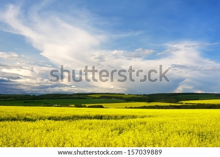 Canola field in bloom with storm on the horizon