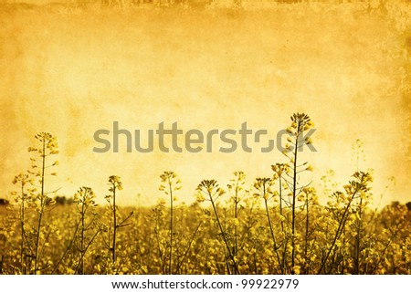 Canola field in grunge and retro style.