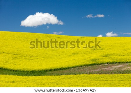 Canola Fields and Rolling Hills
