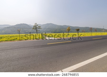 Canola flower road - stock photo