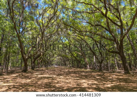 Canopy of old live oak trees draped in spanish moss at historic Wormsloe Plantation in Savannah, Georgia, USA - stock photo
