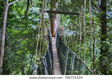 Canopy walk Taman Negara Malaysia & Canopy Walk Taman Negara Malaysia Stock Photo 786721654 - Shutterstock