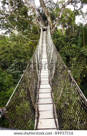 Canopy walkway strung between two rainforest trees in the Ecuadorian Amazon - stock photo