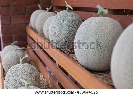Elegant Cantaloupe Melon Design