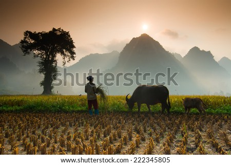 CAOBANG, VIETNAM, OCTOBER 5: Unidentified farmers work in rice field on October 5, 2014 in Caobang, Vietnam. Caobang is North East province of Vietnam near China