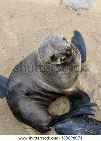 Cape fur seal sits on the stone coast of Atlantic ocean. Seal colony on the Cape Cross, Skeleton Coast, Namibia. View from above - stock photo