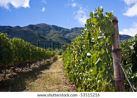 Cape Town Stellenbosch South Africa Winelands - stock photo