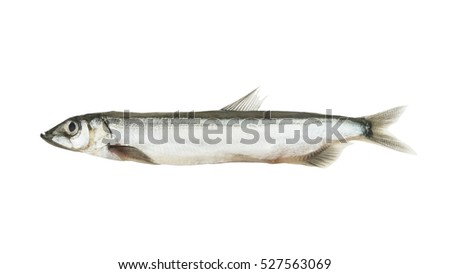Capelin fish isolated on white background