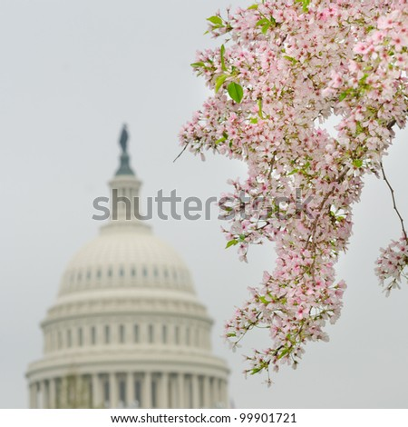 Capitol Building dome and blooming trees in Spring, Washington DC USA - stock photo