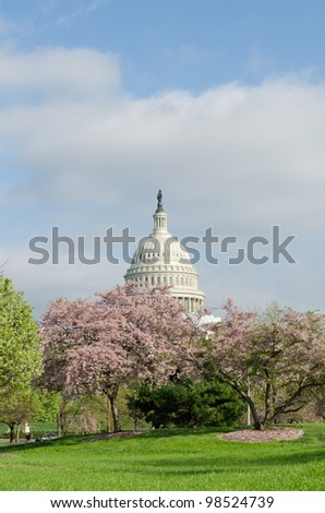 Capitol building in bloomed trees in spring, Washington DC