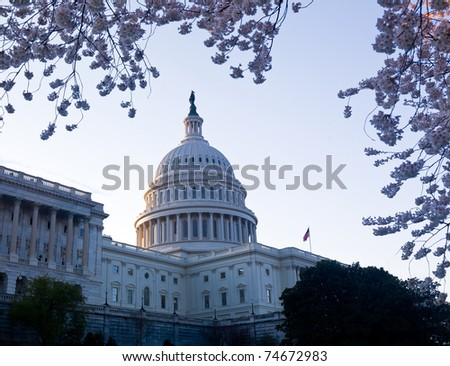 Capitol building in Washington DC illuminated early in the morning with cherry blossoms framing the dome of the building - stock photo
