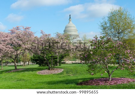 Capitol Building with blooming trees foreground in Spring, Washington DC USA