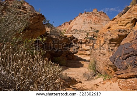 Capitol-Reef-Nationalpark in Utah is located in an area near to the Fremont River.